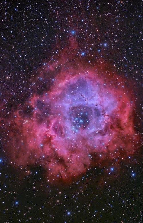 The_rosette_nebula